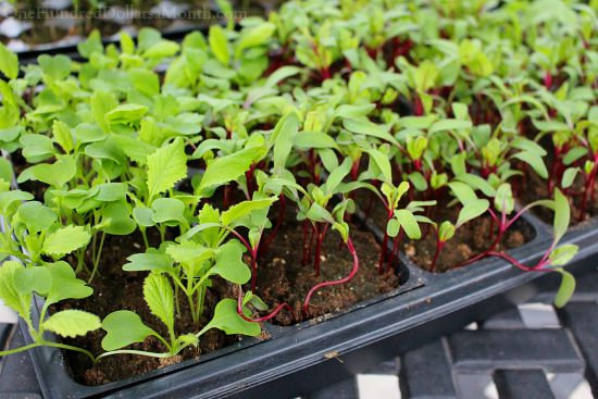 New Beginnings, Goodbye Garden Boxes and Seedlings on Crack