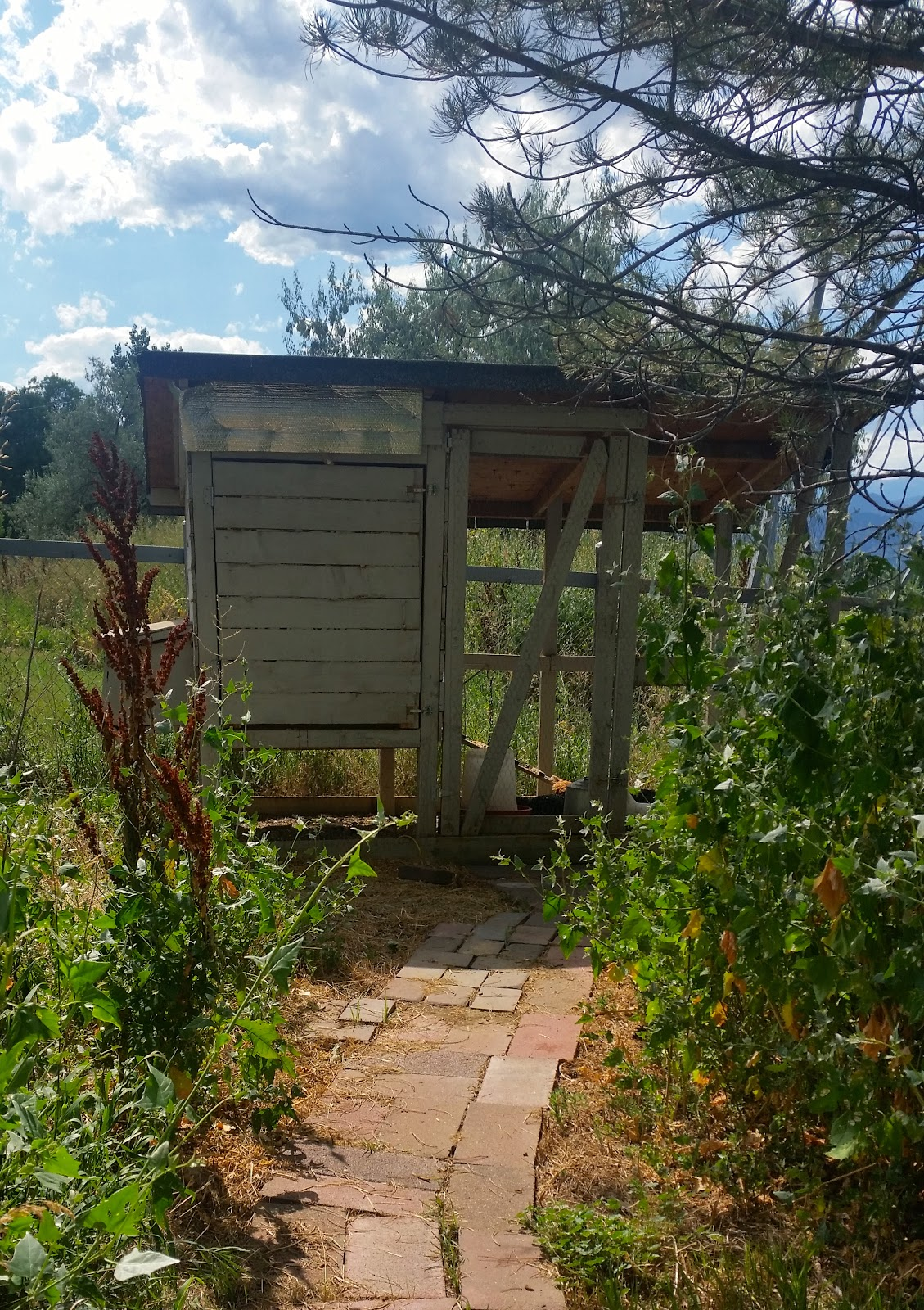 Mavis Mail – Tanya From Boulder, CO Sends in Pics of Her Chickens & Coop