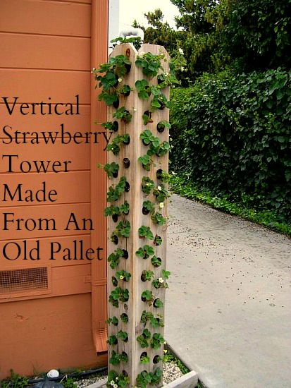 vertical-pallet-gardening-Strawberry-Tower