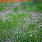 Mavis Butterfield | Backyard Garden Plot Pictures 9/13/15