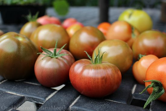 Mavis Butterfield | Backyard Garden Plot Pictures 9/20/15