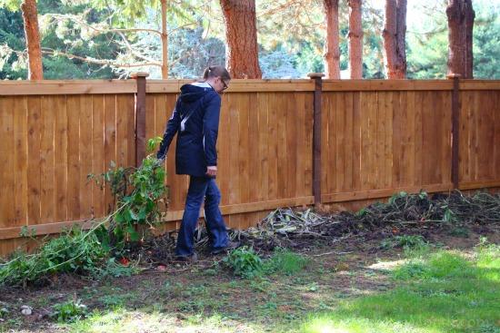 Mavis Butterfield | Backyard Garden Plot Pictures 10/25/15