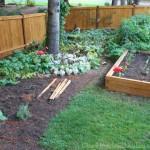 Mavis Butterfield   Backyard Garden Plot Pictures 10/4/15