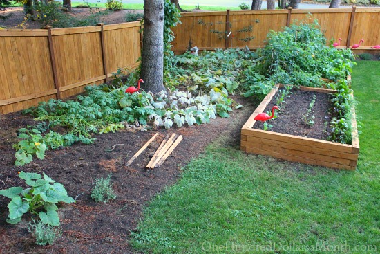 Mavis Butterfield | Backyard Garden Plot Pictures 10/4/15