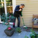 Mavis Butterfield | Backyard Garden Plot Pictures 10/11/15