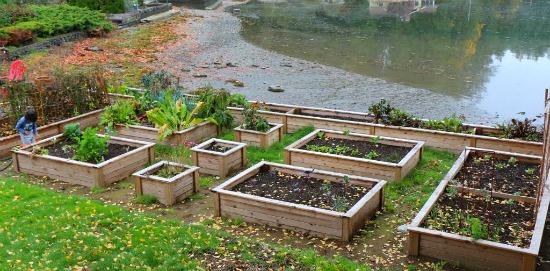 Henrietta From Bremerton, Washington Sends in Fall Garden Photos