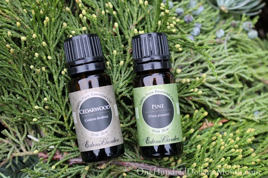 How to make pine potpourri one hundred dollars a month Edens garden essential oils coupon