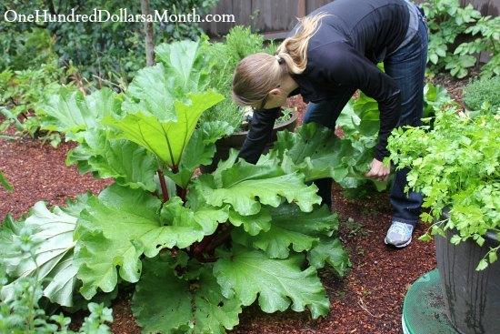 Top 5 Reasons Why Perennial Vegetables Rule!
