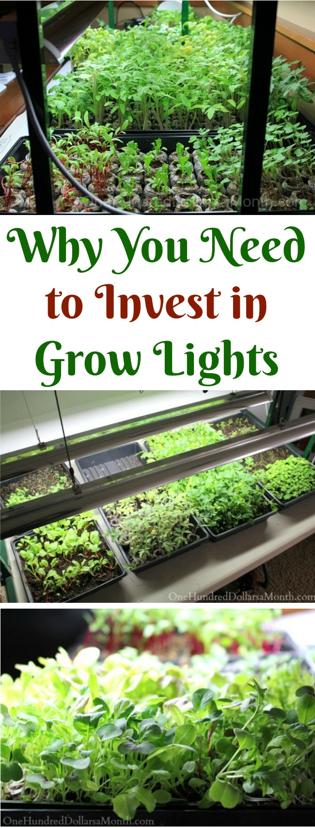 Why I Think You Should Invest in Grow Lights