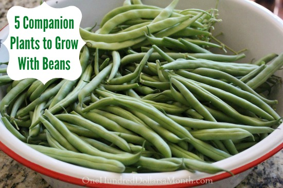 5 Companion Plants to Grow With Beans