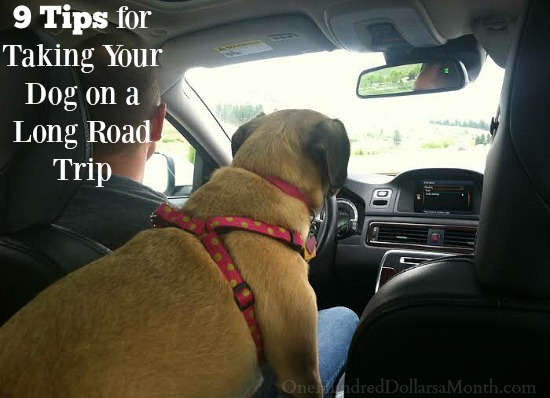 9 Tips for Taking Your Dog on a Long Road Trip