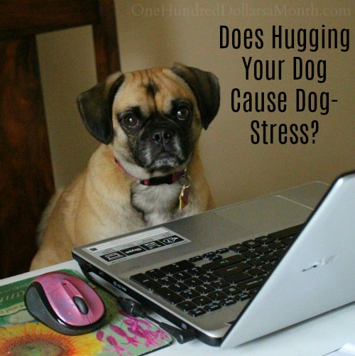Does Hugging Your Dog Cause Dog-Stress?