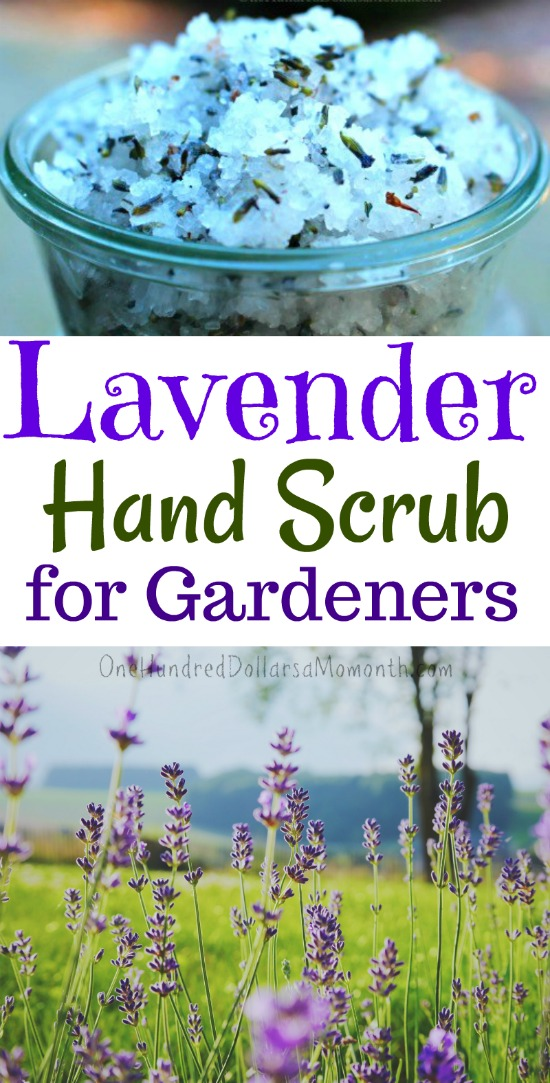 Gardener's Lavender Hand Scrub Recipe