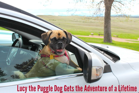 Mavis Heads East and Lucy the Puggle Dog Gets the Adventure of a Lifetime