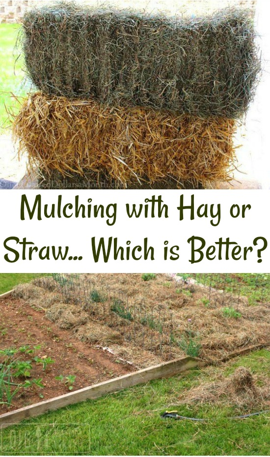 What Are Your Using to Mulch Your Garden Beds with this Summer?
