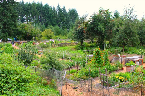 Wilkinson Farm Community Garden in Gig Harbor, Washington