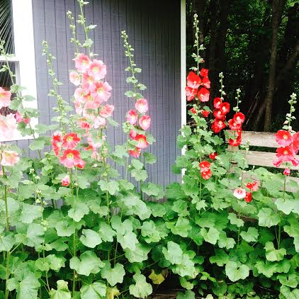 Hannah From Northwest Minnesota Sends in Her Garden Photos