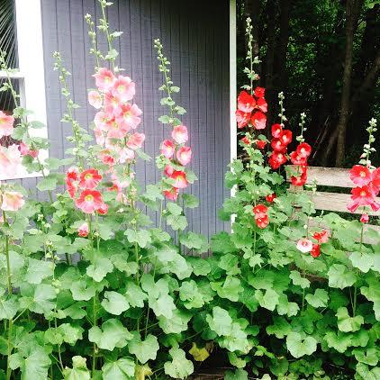 Hannah From Northwest Minnesota Sends in Her Garden Photos