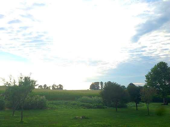My Friend Zoe From Pennsylvania Sends in Her Summer Garden Photos