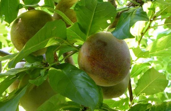 Mavis Mail – Julie From Southern Oregon Sends in Her Garden Photos