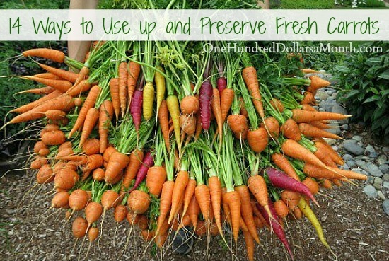 14 Ways to Use up and Preserve Fresh Carrots