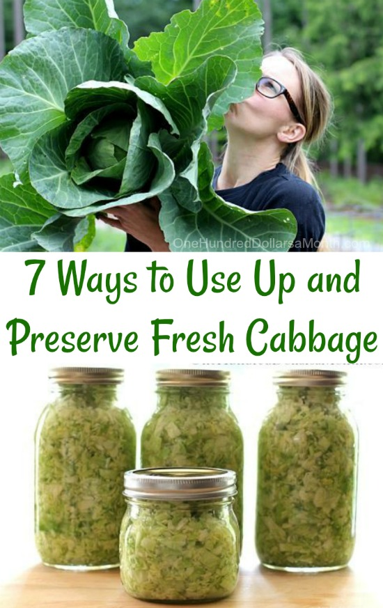 7 Ways to Use Up and Preserve Fresh Cabbage