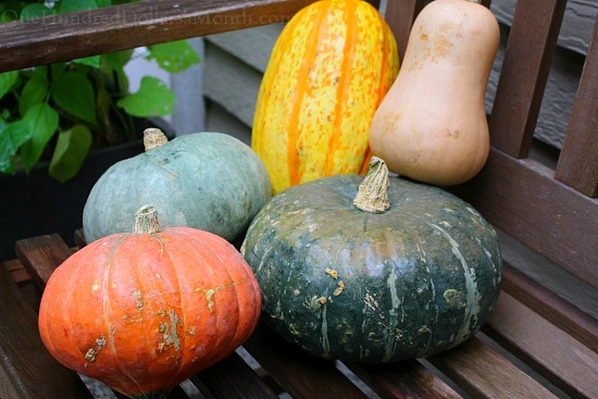 Does Anyone Love Winter Squash as Much as I Do?