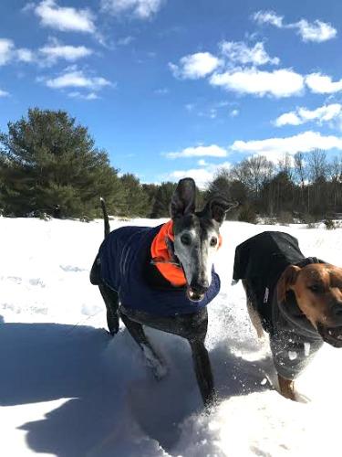 Heather From Massachusetts Shares Her Winter Storm Photos