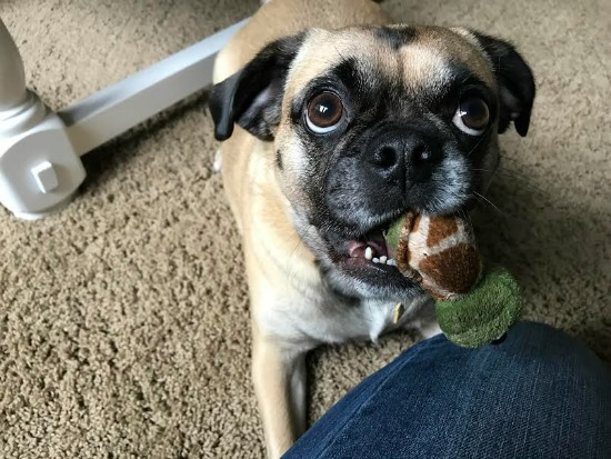 Lucy Shows Your Her Little Turtle, Free Redbox Code, Online Grocery Deals and More