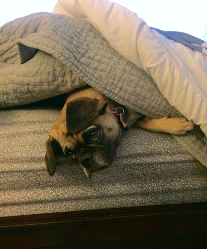 Lucy Doesn't Want to Get Out of Bed, Online Grocery Deals, Sweet Deal on Batteries and More