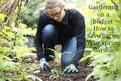 Gardening on a Budget: How to Save Big on Your Spring Garden