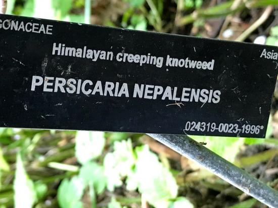 The Greenheart TreeWalk at the UBC Botanical Garden