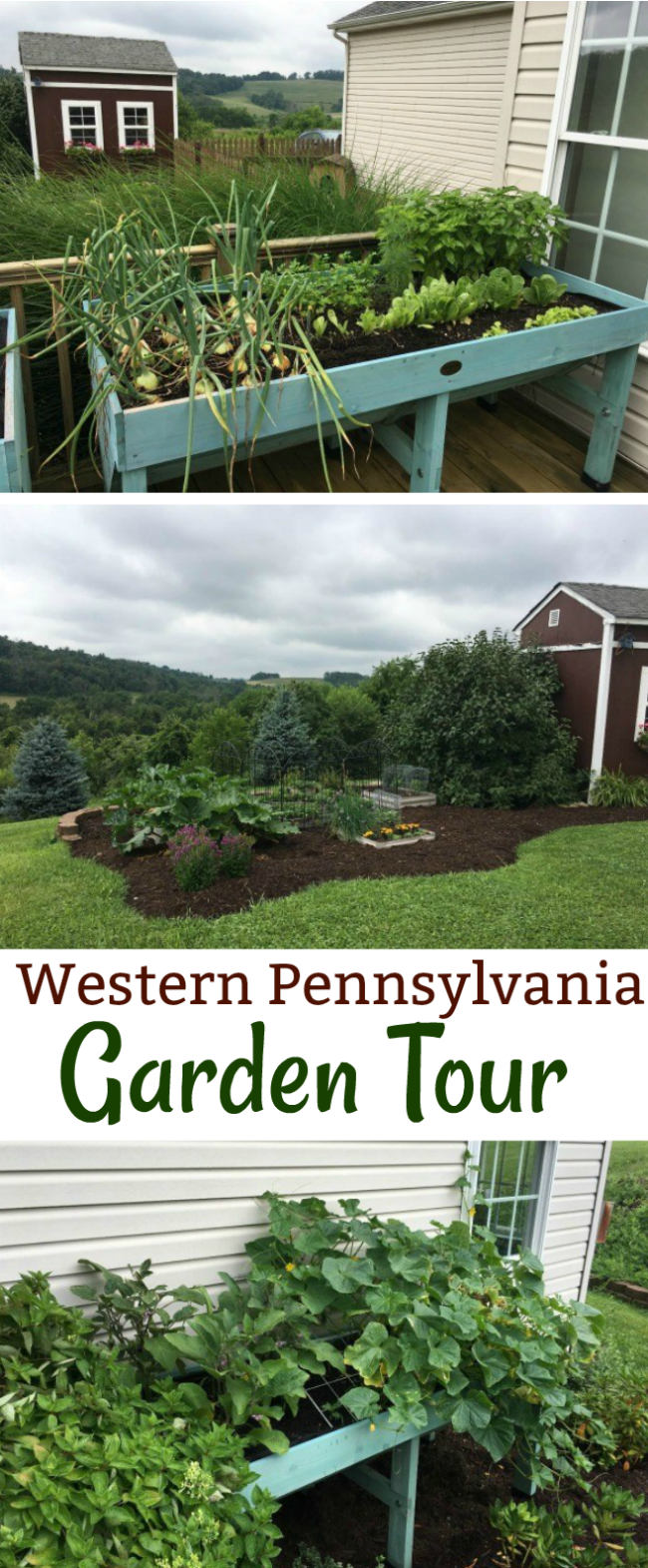 Mavis Mail – Tina From Western Pennsylvania Sends in Her Garden Photos