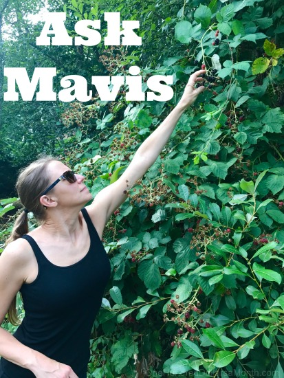 Ask Mavis: International Travel Tips, Lucy's Harness, Sugar Substitutions in Jam and More!