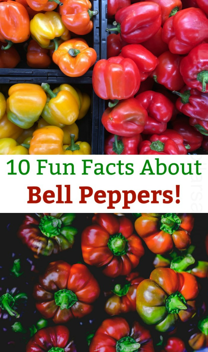 10 Fun Facts About Bell Peppers!