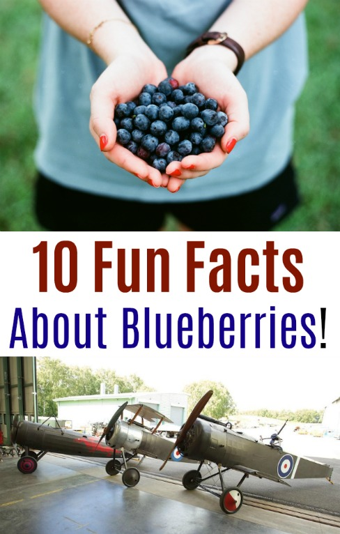 10 Fun Facts About Blueberries!