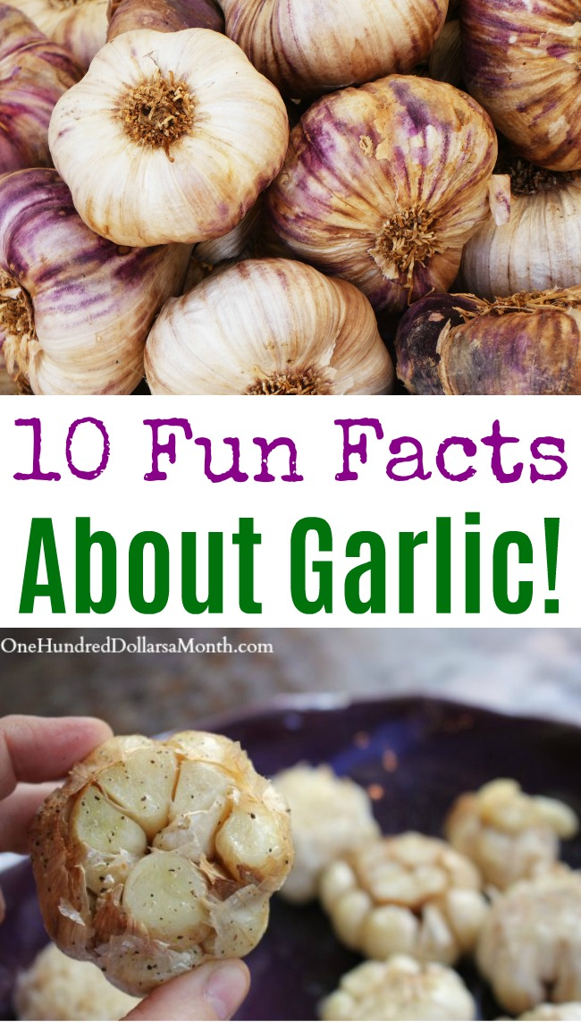 10 Fun Facts About Garlic!