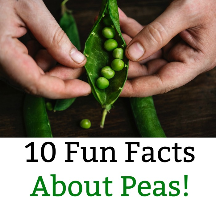 10 Fun Facts About Peas!