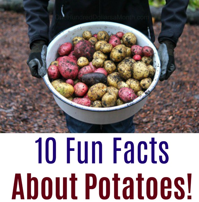 10 Fun Facts About Potatoes!