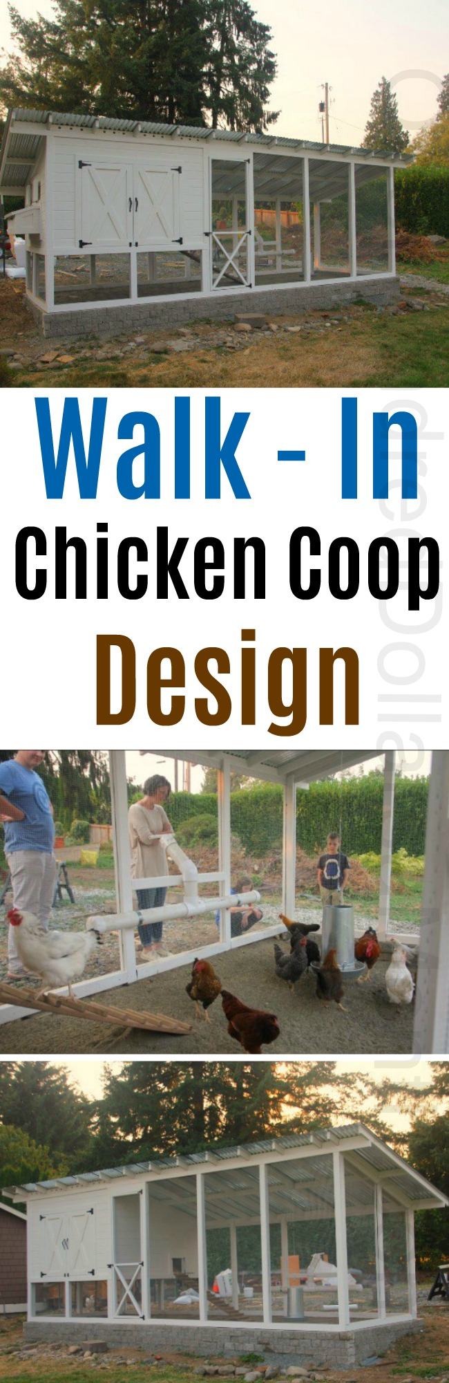 Mavis Mail – Mama Cook From Snohomish Sends in Her Walk in Chicken Coop Photos