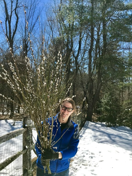 Gardening in New England – Tilling Up the Garden, Pussy Willows and TICKS