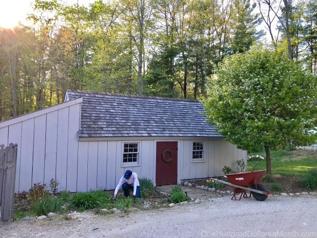 I Need Your Help! Should We Turn Our Potting/Wood Shed into a Chicken Coop?
