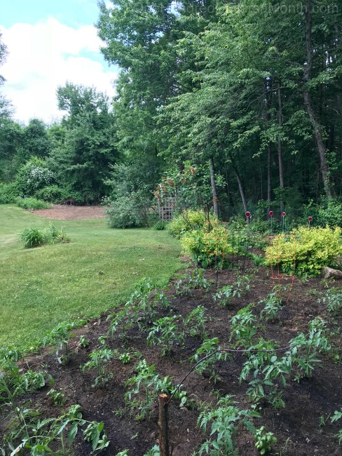 Gardening in New England – Fruit Trees, Gypsy Moths, Expanding the Vegetable Plot and More