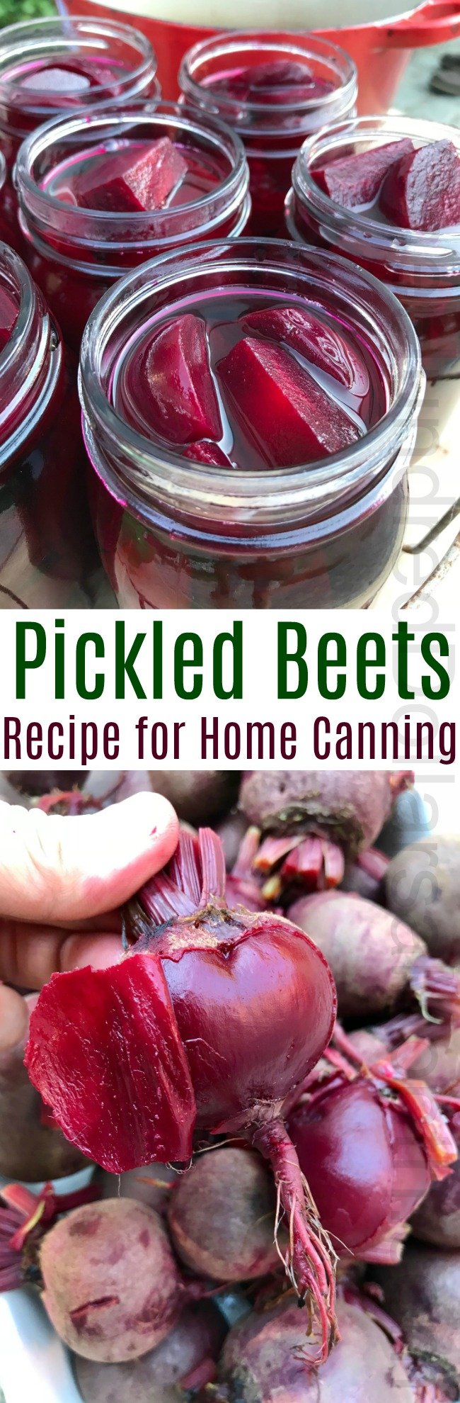 Canning Recipe for Old Fashioned Pickled Beets {No Funky Spices!}