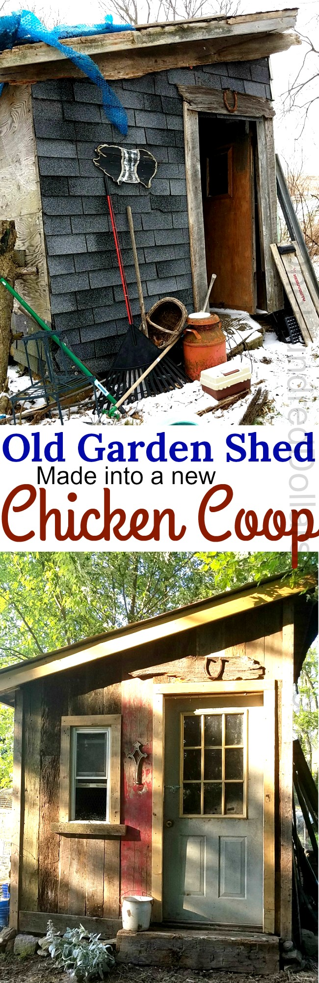 Peggy Shares How Her Husband Turned an Old Garden Shed into a New Chicken Coop