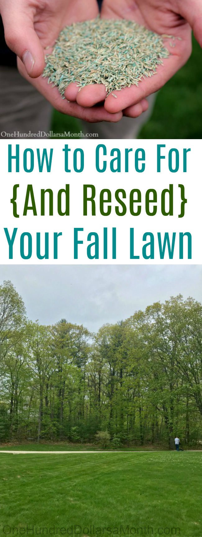 How to Care For {And Reseed} Your Fall Lawn