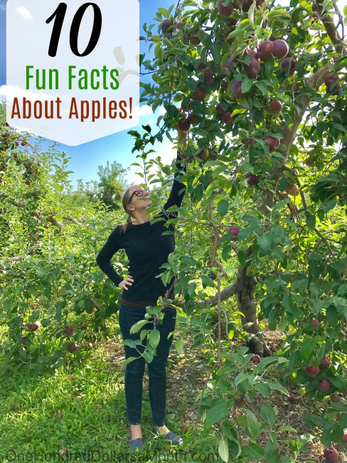 10 Fun Facts About Apples!