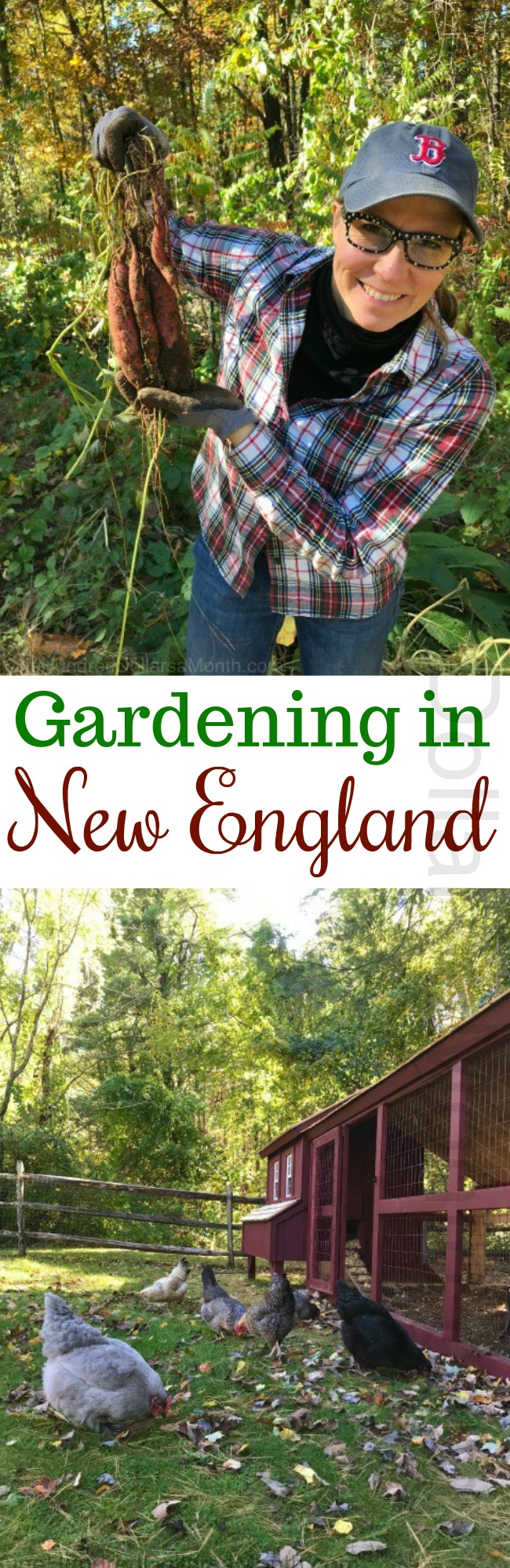 Gardening in New England – The Final Harvest of the Year