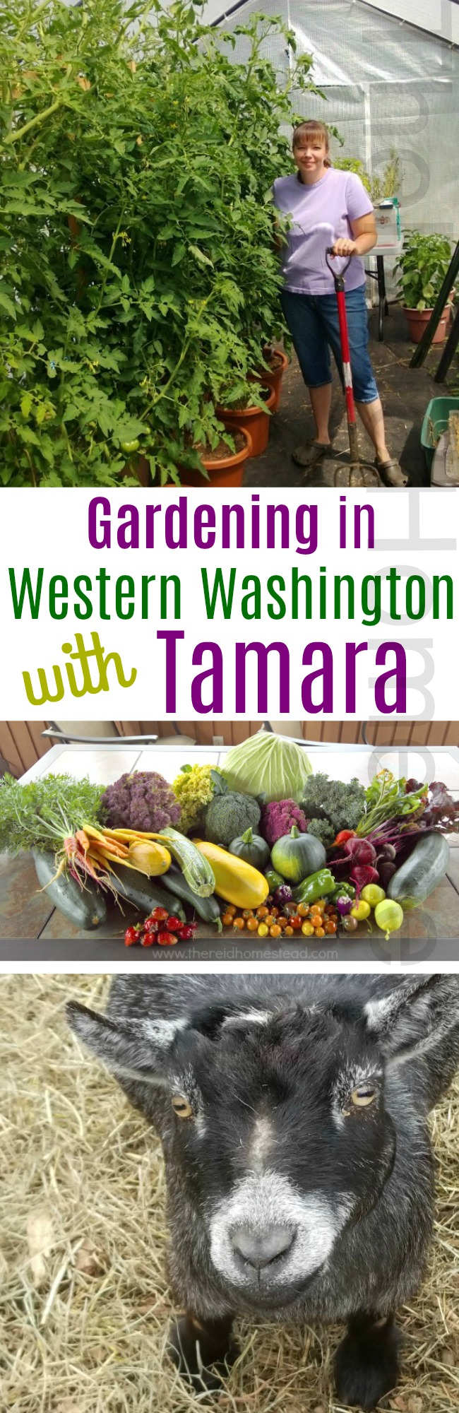 Mavis Mail – Tamara From Monroe, Washington Sends in Her Garden, Goat and Chicken Photos