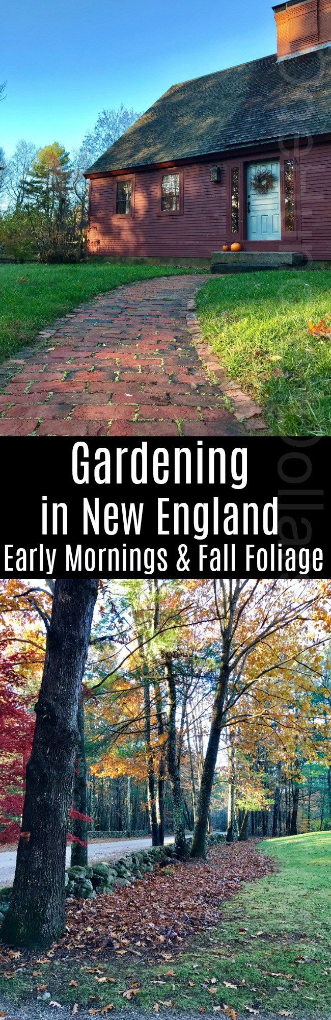 Gardening in New England – Early Mornings and Fall Foliage